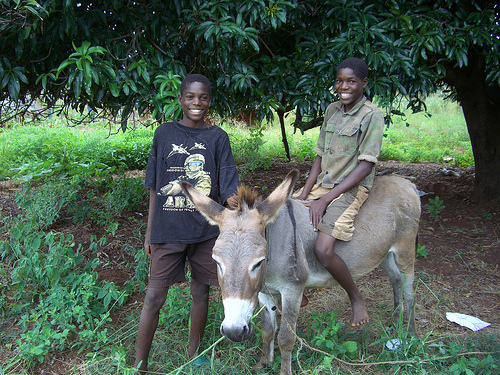 Presents for Mukuni: Donate a donkey