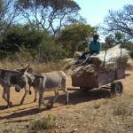 Rural life in Mukuni Village
